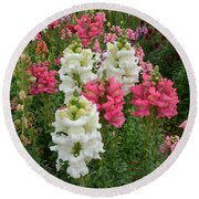 Snapdragons Round Beach Towel