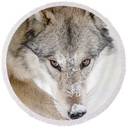 Sneaky Wolf Round Beach Towel