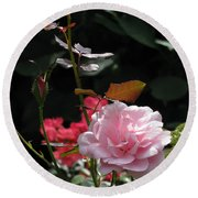 Sniff - Tea Rose Round Beach Towel