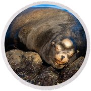 Snoozing Round Beach Towel
