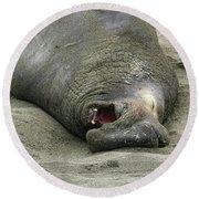 Snoring Elephant Seal Round Beach Towel