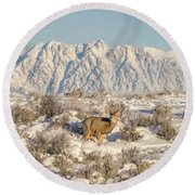 Snow-buck In Wyoming Round Beach Towel