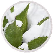 Snow Covered Agave Round Beach Towel