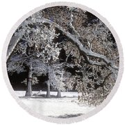 Snow Covered Black Oak Yosemite National Park Round Beach Towel