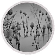 Snow Covered Coneflowers Round Beach Towel
