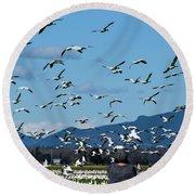 Snow Geese Rising Round Beach Towel