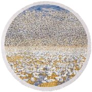 Snow Geese Take Off 1 Round Beach Towel
