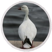 Snow Goose Round Beach Towel