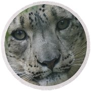 Snow Leopard 10 Round Beach Towel