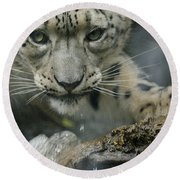 Snow Leopard 11 Round Beach Towel