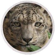 Snow Leopard 13 Round Beach Towel