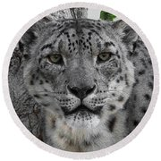Snow Leopard 5 Posterized Round Beach Towel