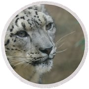 Snow Leopard 8 Round Beach Towel