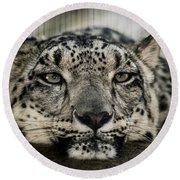 Snow Leopard Upclose Round Beach Towel