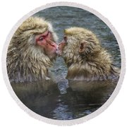 Snow Monkey Kisses Round Beach Towel
