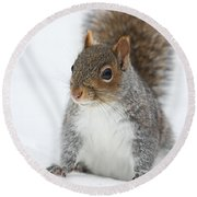 Snow Squirrel Round Beach Towel