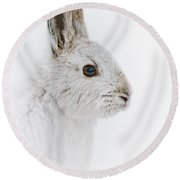 Snowshoe Hare Pictures 146 Round Beach Towel