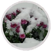 Snowy Chrysanthemums Round Beach Towel