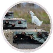 Snowy Egret #2 Round Beach Towel