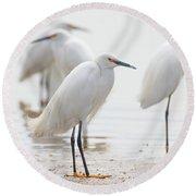 Snowy Egret And Friends Round Beach Towel