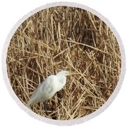 Snowy Egret In Tall Grasses Round Beach Towel