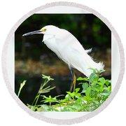 Snowy Egret In The Everglades Round Beach Towel