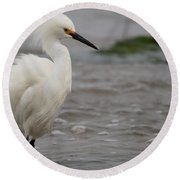 Snowy Egret In The Wind Round Beach Towel