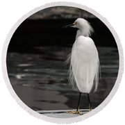 Snowy Egret Looking For Next Meal Round Beach Towel