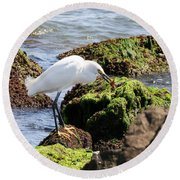 Snowy Egret  Series 2  1 Of 3  The Catch Round Beach Towel