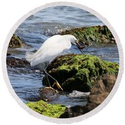 Snowy Egret  Series 2  2 Of 3  Preparing Round Beach Towel