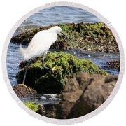 Snowy Egret  Series 2  3 Of 3  Adjusting Round Beach Towel