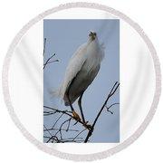Snowy Egret  Watching Round Beach Towel