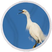 Snowy Egret With Attitude Round Beach Towel