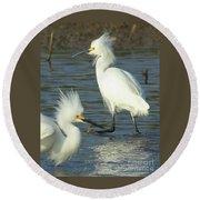 Snowy Egrets Round Beach Towel