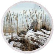 Snowy Owl In Dunes #2 Round Beach Towel