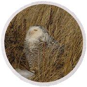 Snowy Owl In Grass Round Beach Towel