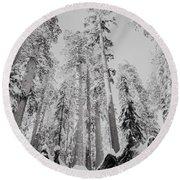 Snowy Sequoias At Calaveras Big Tree State Park Black And White 3 Round Beach Towel