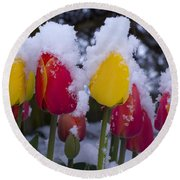 Snowy Tulips Round Beach Towel