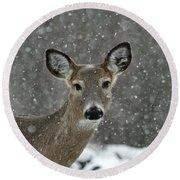 Snowy Winter Deer Round Beach Towel