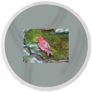 Soaking Summer Tanager Round Beach Towel