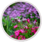 Soapwort And Pinks Round Beach Towel