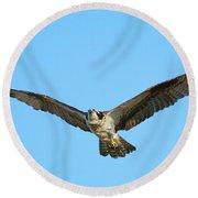 Soaring Osprey Round Beach Towel