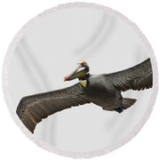 Soaring Pelican Beauty Round Beach Towel