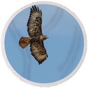 Soaring Red Tail Hawk Round Beach Towel