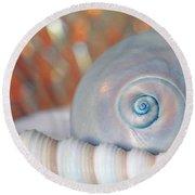 Soft Colored Shells Round Beach Towel