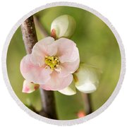 Pink Quince Blossom Round Beach Towel