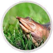 Soft Shell Turtle  Round Beach Towel