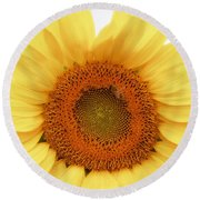 Soft Sunflower Round Beach Towel