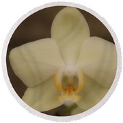 Soft Yellow Orchid Two Round Beach Towel