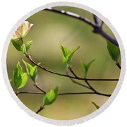 Solitary Dogwood Bloom Round Beach Towel
